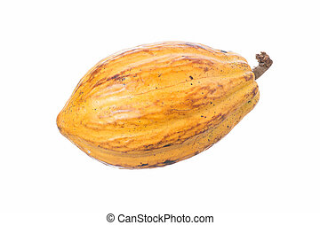 Cacao pod isolated on white - Large ripe Theobroma cacao pod...