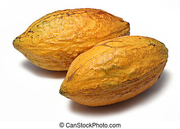 Two fresh cacao pods isolated on a white background