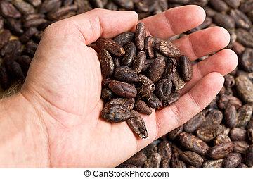 cacao, poignée, haricots