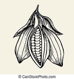 cacao, symbole, vecteur