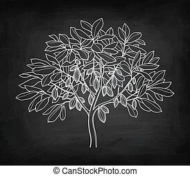 Cacao tree chalk sketch - Cocoa tree. Chalk sketch on...