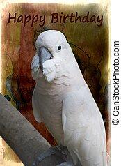 cacatua, papegaai, voor, gelukkige verjaardag