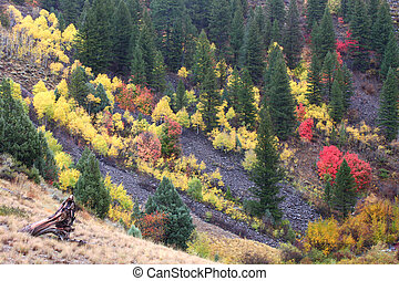 Cache National Forest Fall Scenery