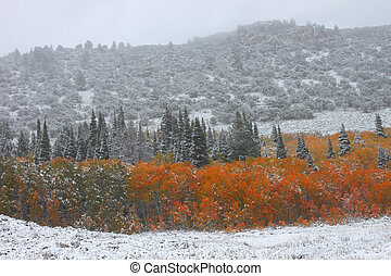 Cache National Forest - Utah