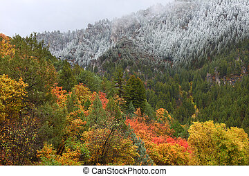 Cache National Forest - Utah - Snowfall blankets colorful...