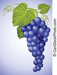cacho, de, azul, uva, com, folha verde