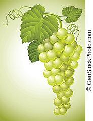 cacho, de, uva, com, verde sai