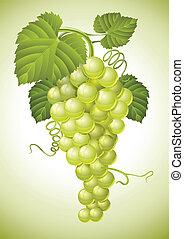 cacho, folhas, uva, verde