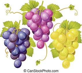 cacho, três, uvas