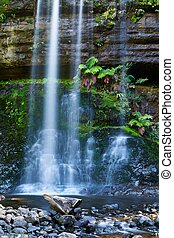 cachoeira, em, a, floresta