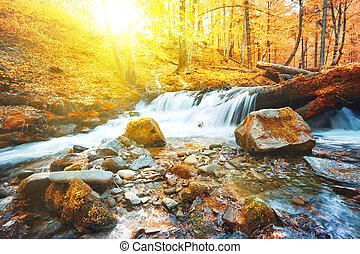 cachoeira, ligado, rio, em, floresta