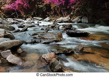 cachoeiras, em, a, selva