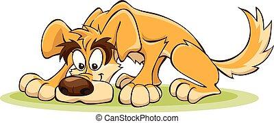 cachorro amarelo, cheirar, a, chão