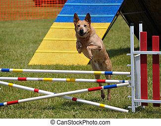 cachorro grande, pular, sobre, um, pulo duplo, em,...