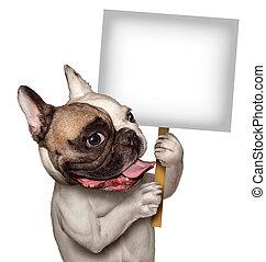 cachorro macho, segurando, sinal