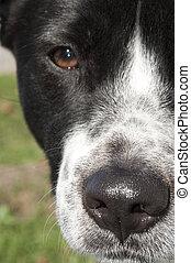 cachorro, nariz