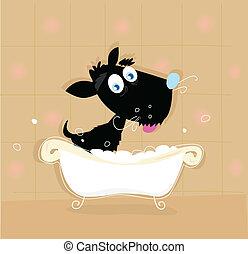 cachorro preto, banho