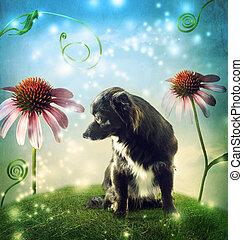 cachorro preto, em, um, fantasia, hilltop, com, echinacea, flores