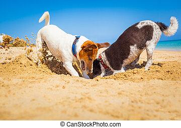 cachorros, cavando, um, buraco