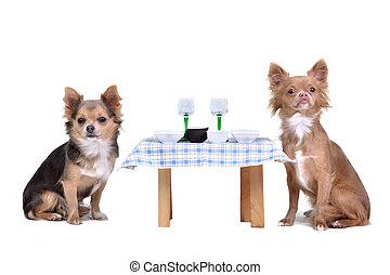 cachorros, desfrutando, seu, refeição