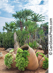 Cacti and palm trees in the garden.