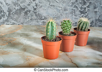 cacti on a marble background
