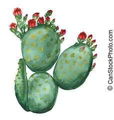 cacto, florecer, opuntia