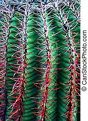 cacto saguaro, 1