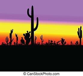 cacto, silueta, desierto