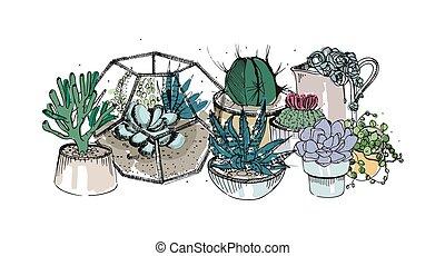 cacto, y, succulents, composition., colección, plantas, en, ollas, florarium., colorido, vector, mano, dibujado, ilustración, en, bosquejo, estilo, aislado, blanco, fondo.