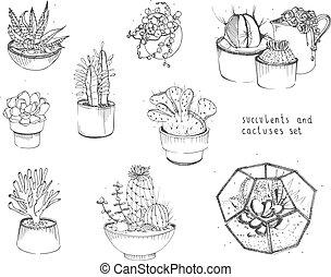 cacto, y, succulents, set., colección, plantas, en, ollas, florarium, aislado, blanco, fondo., mano, dibujado, ilustración, en, bosquejo, style.