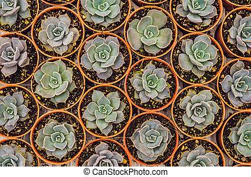 cactos, ollas, pequeño, plano de fondo, cacto, pattern.