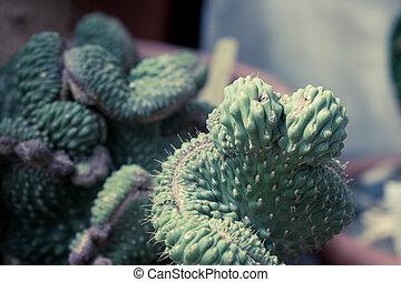 cactos, selectivo, arriba, succulents, verde, foco, cierre