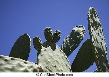 Cactus against a blue sky