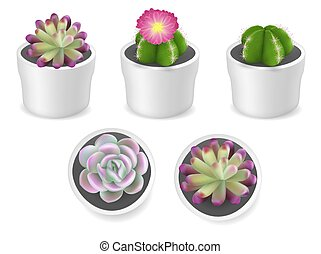 Cactus and succulent plants in pots, vector isolated illustration