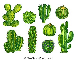 Cactus and succulents, agave sketch plants vector - Cactus ...