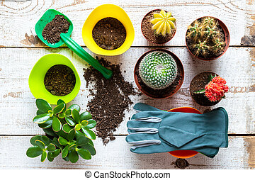 Cactus and succulents house plants background. Collection of various house plants, gardening gloves, potting soil and trowel on white wooden background. Potting house plants background.