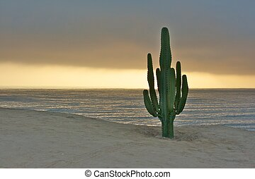 cactus and the pacific ocean