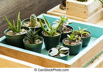 Cactus assortment with different prickly plants in pots