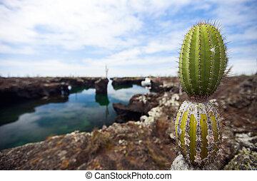 Cactus at Galapagos Los Tuneles