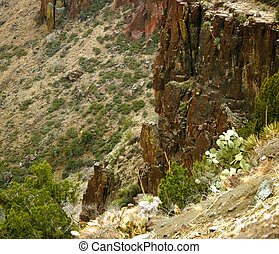 Cactus Cliff