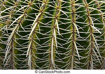 Cactus closeup.