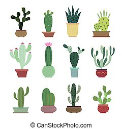 Cactus collection illustration set