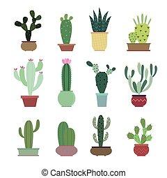 Cactus collection illustration set
