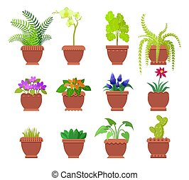 Cactus Collection of Plants Vector Illustration