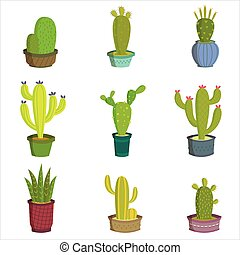 Cactus collection set