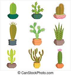 Cactus collection set