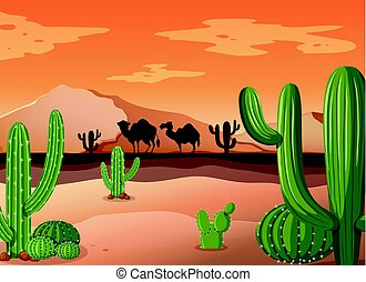 cactus, coucher soleil, scène, désert