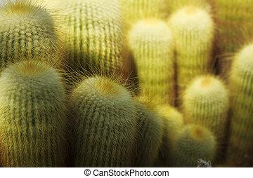 cactus, détails