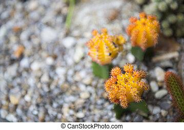 cactus decorated in flower pot
